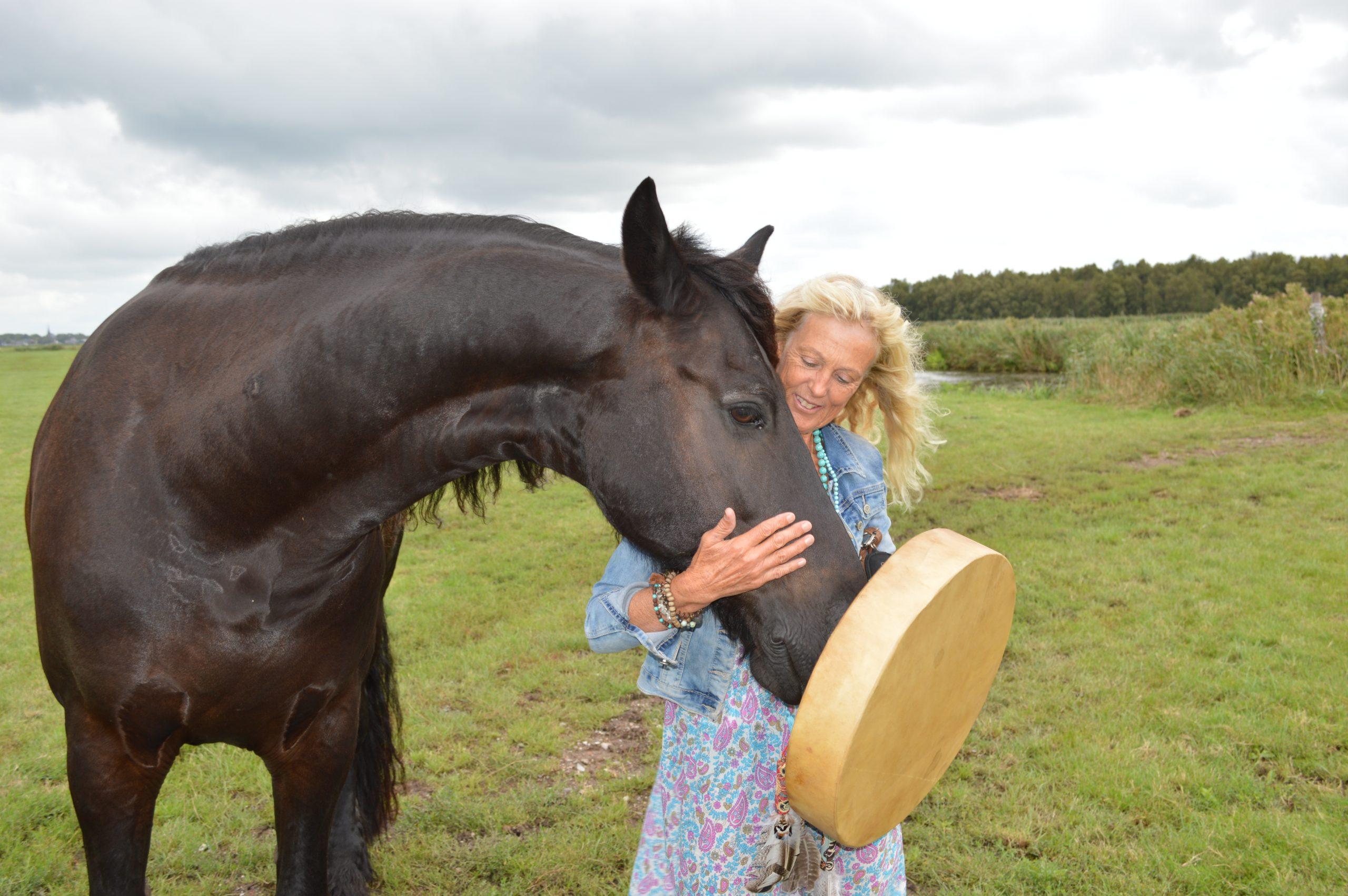 maak een reis naar binnen, paarden spiegelen je ziel